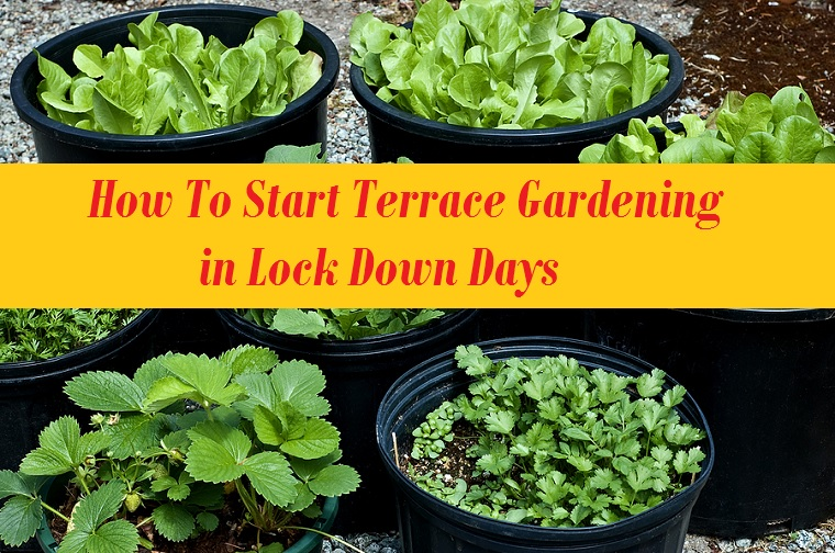 How To Start Terrace Gardening in Lock Down Days