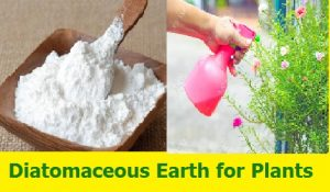Diatomaceous Earth for Plants