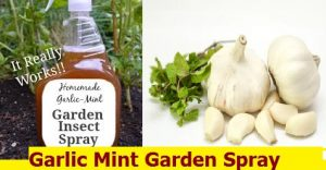 Garlic Mint Garden Spray