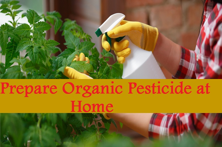 How To Prepare Organic Pesticide at Home