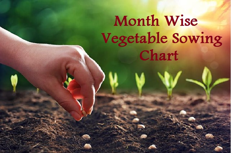 Month Wise Vegetable Sowing List