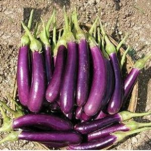 Long Purple Brinjal Seeds