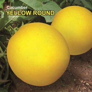 Yellow Round Cucumber Seeds